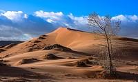 Dunes of Coral Pink Sand Dunes State Park, Utah, USA.