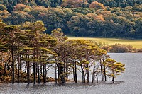 Muckross Lake and Killarney National Park, Muckross, Co. Kerry, Ireland.