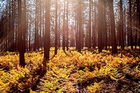 Autumn comes to forests in Central Oregon.
