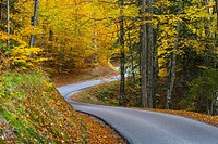 Country road Autumn warm colors