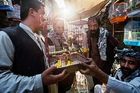 Vendors selling canary at Ka Farushi Bird´s Market, Kabul, Afghanistan.