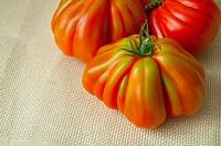 Three raf tomatoes. Close view.