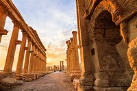 Great Colonnade at sunset. Palmyra, Syria.