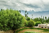 Views from a guesthouse in Leh nearby Sankar Gompa. Traditional family houses have a private vegetable garden. Ladakh´s landscape combines barren moun...