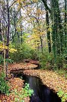 Lowcountry Fall Foliage along a winding brook near Adams Run, South Carolina.