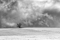 A single tree sits atop a snow covered field on a cold, winter day.