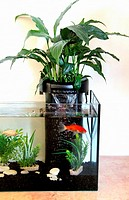 Step by step: how to create a water filter for an aquarium with a plant, a spathiphyllum.