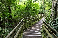 Jungle walkway at the Lower Trail, Iguazú National Park, Argentina.