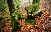 Spain. Galicia. Pontevedra. Tui. Nature reserve of the Monte Aloia.