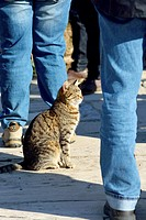 Ephesus, Cats seems to be part of the excavations, Selcuk, Turkey.