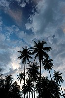 Silhouette of coconuts palms at sunset, Koh Kood island, Ko Kut district in Trat Province, Thailand, Asia.
