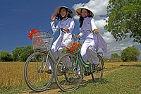 Young women in conical hats and traditional white ao dai costume ride bicycles in rice fields near Phan Thiet Vietnam.