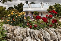 Rose garden in front of colonial cottage, near Kurow, Otago.