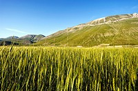 National Park of the Sibillini Mountains, Pian Grande of Castelluccio di Norcia, Umbria, Italy, Europe.