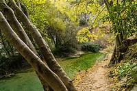 vegetacion de ribera,barranco de la Fuente, Ruta de las pasarelas, Alquézar, municipio de la comarca Somontano Provincia de Huesca, Comunidad Autónoma...
