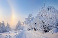 Weg mit schneebedeckten Bäumen umgeben von einem Halo (optisches Naturereignis was durch Eiskristalle produziert wird), Fichtelberg, Erzgebirge, Sachs...