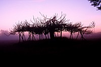 An ancient fig tree during sunrise, in the Antic Camí de la Mola. Formentera (Balearic Islands).