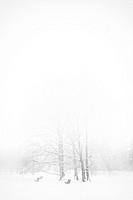 White out, Stromovka park, Prague, Czech Republic