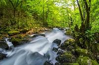 Small river Gerovcica in Gorski kotar in Croatia near town Gerovo
