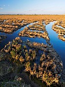 Flooded rice fields after harvest. Ebro River Delta Natural Park, Tarragona province, Catalonia, Spain.