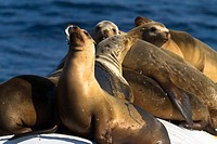 Sea Lions on a buoy outisde of the water.