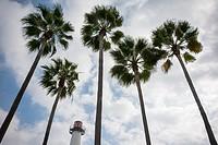 Long Beach Lighthouse among Palm Trees.