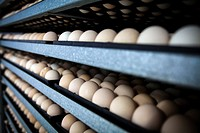 eggs and chicks, Greece.