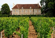 France, property of Chateau castle of Beru in Yonne departement in Burgundy known for it famous Chablis wine.