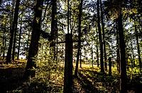 Forest in La Prade, near Najac (Aveyron Department, Midi-Pyrénées Region, France).