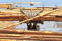 Loader unoading logging truck at sawmill, Ladysmith, Vancouver Island, British Columbia.
