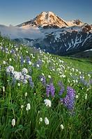Mount Baker seen from wildflowers meadows on Skyline Divide, Mount Baker Wilderness North Cascades Washington.
