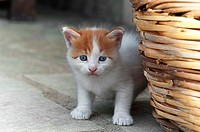 Four weeks old kitten outdoors.