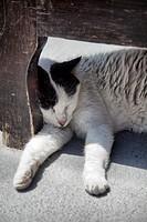 Cat Sleeping Against Outdoor Bench Leg.
