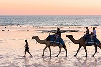 Camels on Cable Beach at sunset, Cable Beach, Broome, Kimberley, Western Australia, Australia.