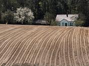 Poland. Podlasie region. Spring. Field and house