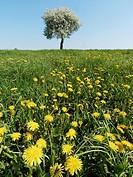 Poland. Podlasie region. Spring