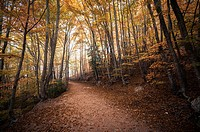 Montseny forest in autumn.