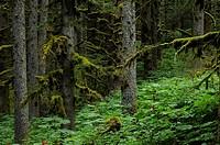 Temperate Rainforest Kodiak Island Alaska.