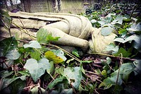 Close-up of a fallen sculpture of a virgin, half covered by leaves. Abney Park Cemetery, Stoke Newington, London, England, UK