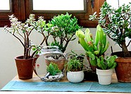 Ambiance of different carnivorous plants in pot indoor.