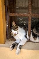 Cat sleeping behind the bars of a window, Krk, Croatia.
