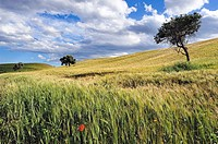 Marchesato Crotone, landscape near the village of Rocca di Neto, district of Crotone, Calabria, Italy, Europe.