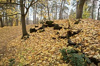 Fall leaves show changing season.