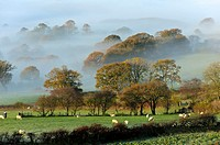 Misty valley landscape at sunrise near Llandrindod Wells, Powys, Wales, UK.