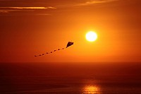 Kite at sunset over sea