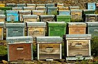 Bee hives. San Vicente de Alcántara, Badajoz province, Extremadura, Spain