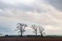 Trees in winter on the way to Crail, Scotland, UK
