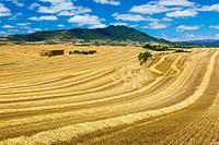 Cereal farm. Tierra Estella County, Navarre, Spain, Europe.