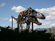 Tyrannosaurus Rex, Museum of the Rockies, Montana USA