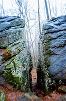 A squeeze passage between 2 large boulders in a forest on a cold foggy day, The Moss Rock Preserve, Hoover, Alabama USA.